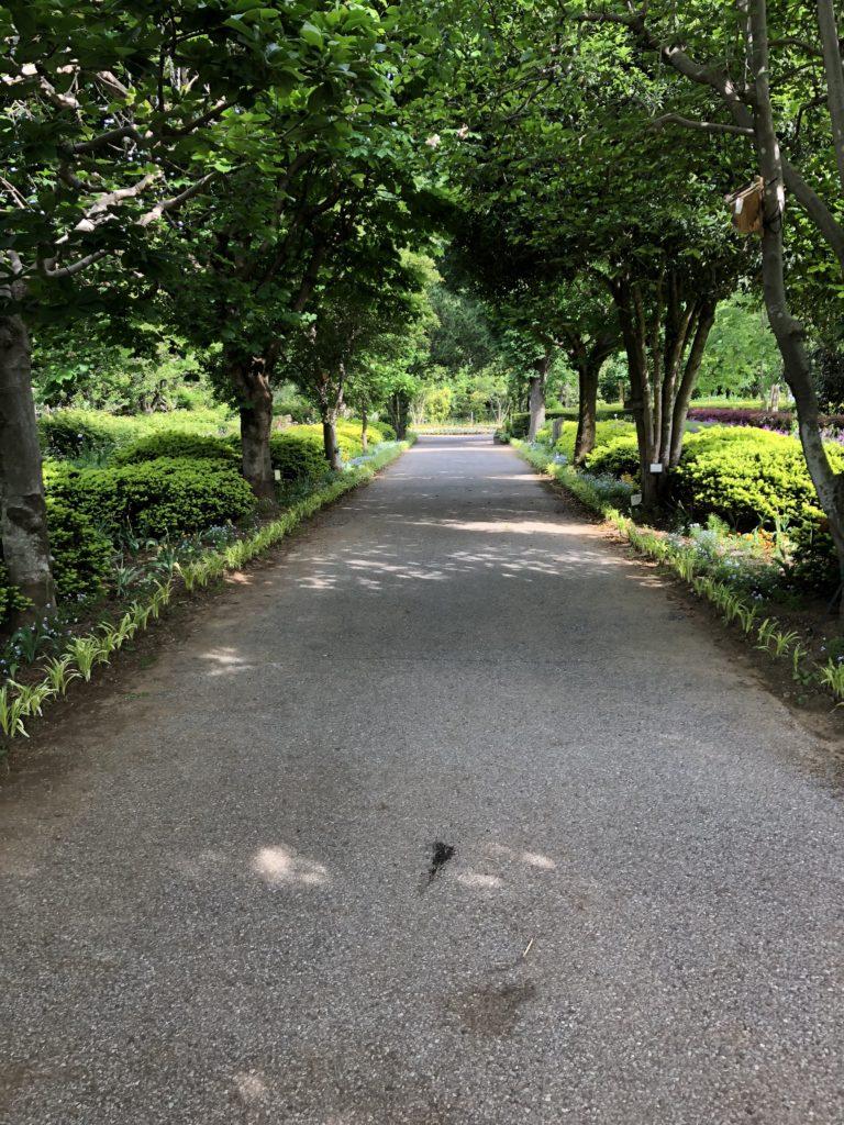 ふかや緑の王国園内の様子3
